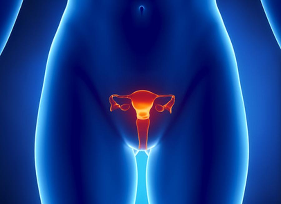 Fisioterapia Uroginecológica. Suelo Pélvico. Embarazadas y sus Trastornos 5